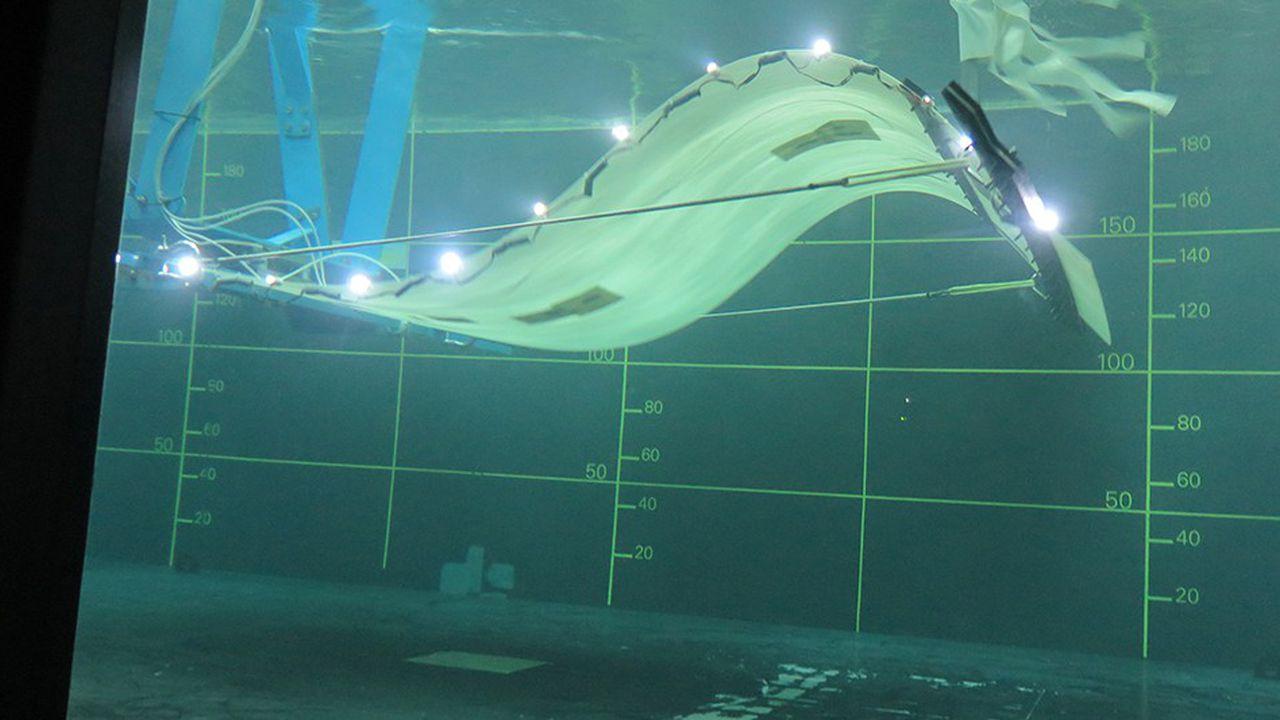 Eel Energy : l'énergie de l'océan