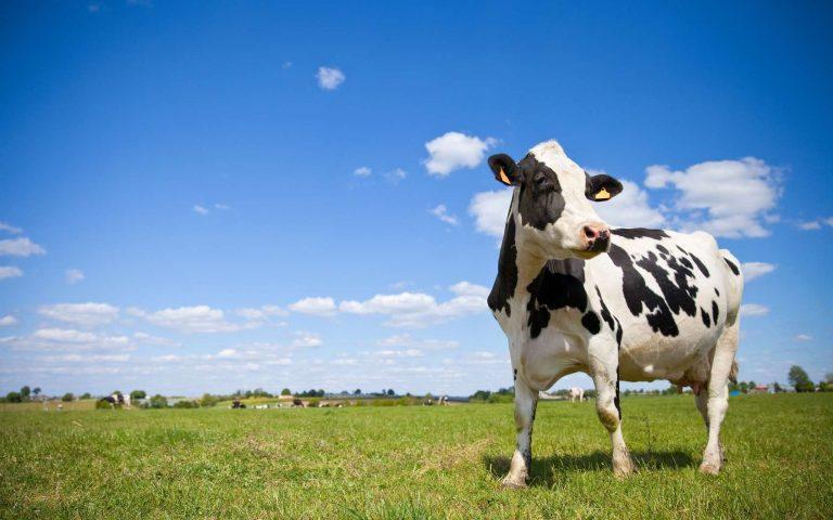 [Résumé] Meat consumption, health, and the environment