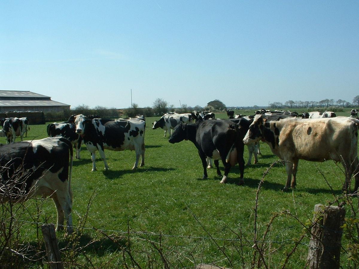 [Note de synthèse] Les produits animaliers et l'environnement