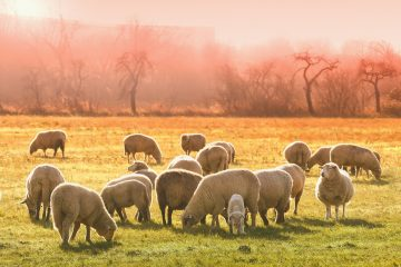 élevage et environnement